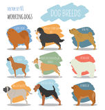 Dog breeds. Working  Royalty Free Stock Image