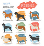 Dog breeds. Working Royalty Free Stock Photos
