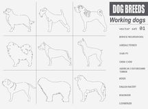 Dog breeds. Working (watching) dog set icon. Flat style Royalty Free Stock Photo