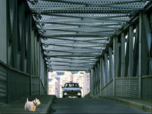 Dog with bridge. White dog with a metal bridge stock photography