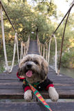 Dog on bridge Stock Photos