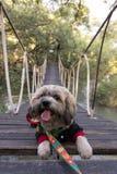 Dog on bridge stock photos