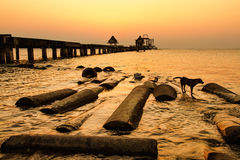 The dog at the bridge in sunset.Thailand Royalty Free Stock Photos