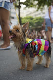 Dog in Bright Colors Rio Animal Carnival Royalty Free Stock Photography