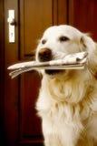 Dog bringing fresh news
