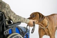 Dog bringing leash Royalty Free Stock Images