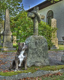 A dog with a  broken heart guard the grave  in HDR Royalty Free Stock Photography