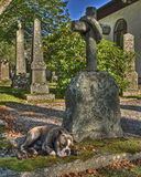 A dog with a  broken heart in HDR. A faithful dog who mourn at his masters grave in HDR. The church is built completely in 1849 in the city of Fritsla in Sweden Stock Images