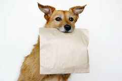 Dog with a brown bag Royalty Free Stock Photo