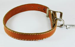 Dog brown leather collar and lead chain Stock Photography