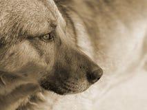 Dog brown light spots, concept, closeup royalty free stock photos