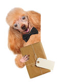 Dog with brown paper parcels delivery Royalty Free Stock Photography