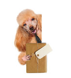 Dog with brown paper parcels delivery Stock Images