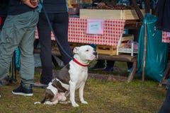 Dog. Royalty Free Stock Images