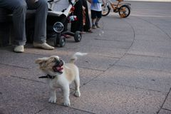 Dog and bubbles Royalty Free Stock Photography