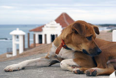 Dog and Buddhist temple. Buddhist temple and bell in Kirinda, Sri Lanka Stock Photo