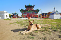 Dog at Buddhist temple Stock Images