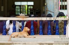 Dog at Buddhist temple in Thailand Stock Photo