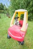 Dog in a buggy Stock Photos