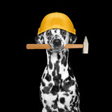 Dog builder holding tools in its mouth Stock Images