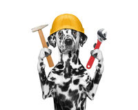 Dog builder holding tools in its paws Royalty Free Stock Images