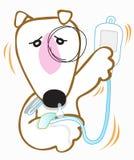 Dog Bull Terrier got sick Royalty Free Stock Images