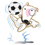 Dog Bull Terrier play soccer Royalty Free Stock Photography