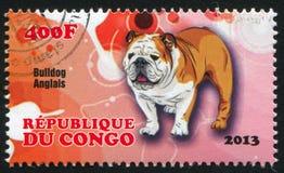 Dog bulldog anglais. CONGO - CIRCA 2013: stamp printed by Congo, shows dog bulldog anglais, circa 2013 royalty free stock photography