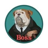 Dog bulldog attentive boss Royalty Free Stock Images