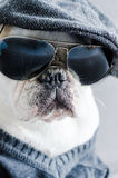 Dog, bulldog with cap, dress, and glasses Royalty Free Stock Images