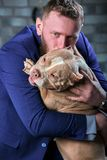 Dog bulli and her owner, her loving master who holds the dog in her arms, hugs and kisses. The dog feels good on the stock photography