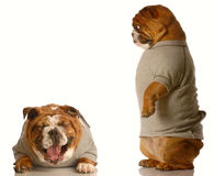 Dog bullying Royalty Free Stock Images