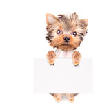 Dog with bunner isolated Stock Photos