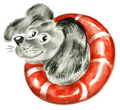 Dog with a buoy. Funny cute dog with a life preserver Royalty Free Stock Image