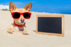 Dog buried in sand Stock Images