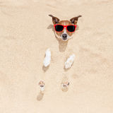 Dog buried in sand Stock Photography