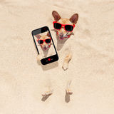 Dog buried in sand selfie Stock Photography