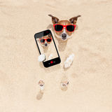 Dog buried in sand selfie Royalty Free Stock Image