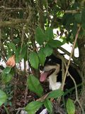 Dog in the Bushes Royalty Free Stock Photos