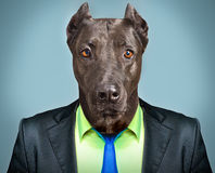Dog in business suit. Portrait of a dog in a business suit Stock Photo