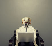 Dog businessman with laptop Stock Image