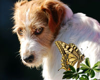 Dog and butterfly Stock Photo