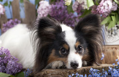 Dog butterfly Stock Images