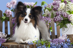 Dog butterfly Royalty Free Stock Images