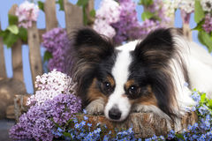 Dog butterfly Stock Photography
