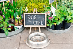 Dog cafe Stock Image