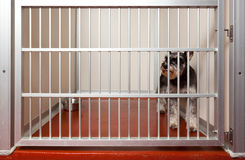 Dog in a cage. Locked up Scottish Terrier in a dog hotell daycare cage Royalty Free Stock Image