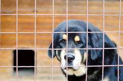 Dog in the cage Stock Photos
