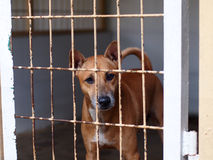 Dog in a cage. A dog in a cage in the Jakarta Animal Shelter, Indonesia Royalty Free Stock Images