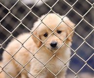 Dog in cage. Closeup lonely dog in cage Royalty Free Stock Photography